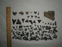 An educational (geology/paleontology) trip report on a SC Pliocene land site