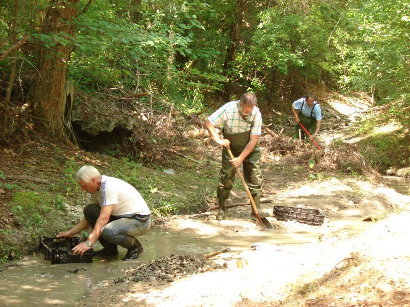 Dutch Creek